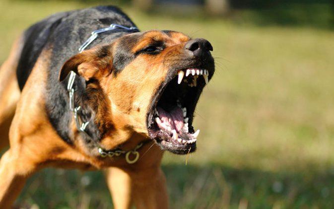 оскал злой собаки