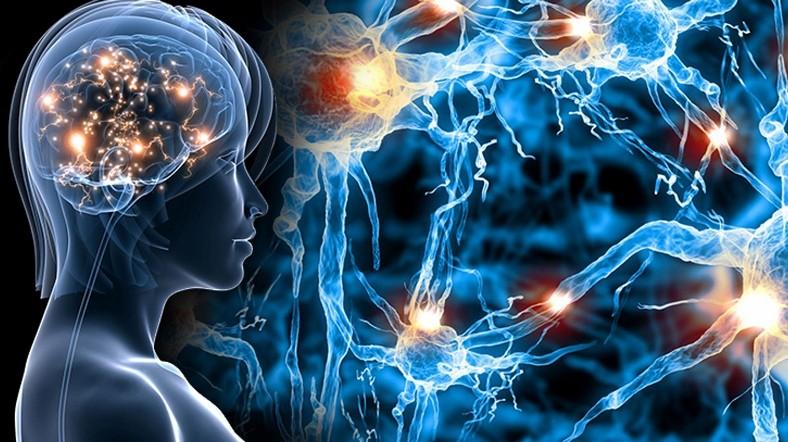 импульсы по нервным волокнам в мозге