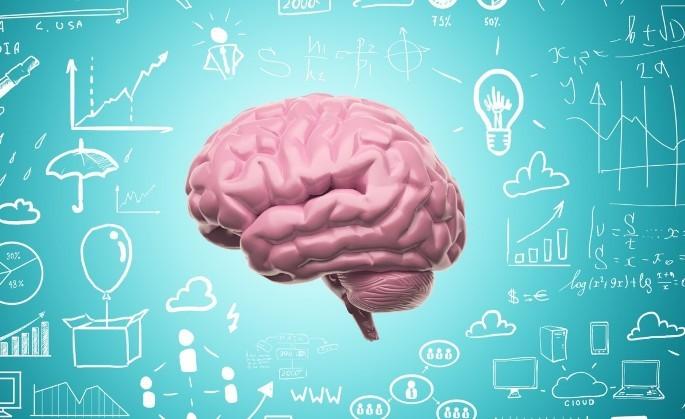 мыли и человеческий мозг