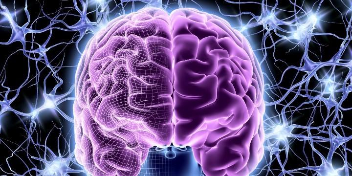 нейроны, мозг
