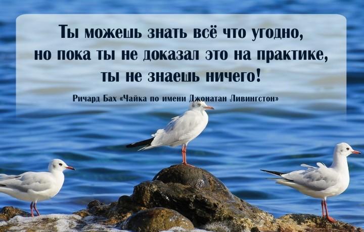 чайка Ливингстон