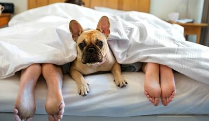 Как влияет на людей сон с домашними животными