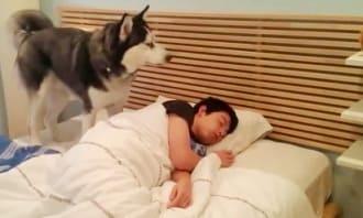 собака утром будит своего хозяина
