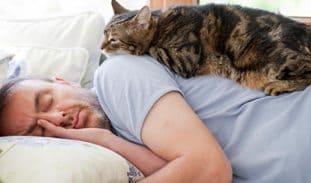 кошка спит сверху на человеке