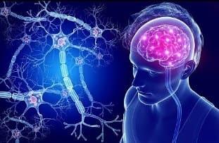 мозг и нейромедиаторы