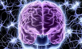 мозг и его работа