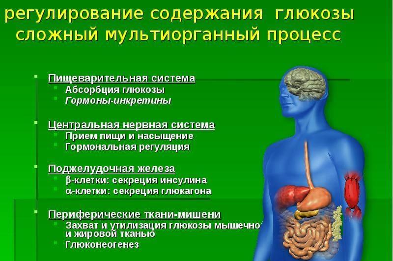 глюкоза в организме