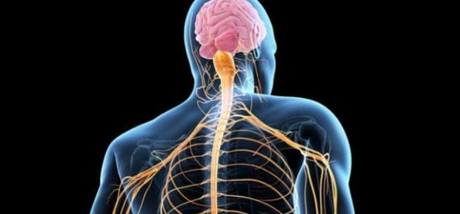 Нервные заболевания: о разновидностях патологий и методах воздействия
