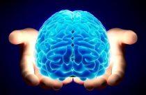 Пять удивительных фактов о человеческом мозге